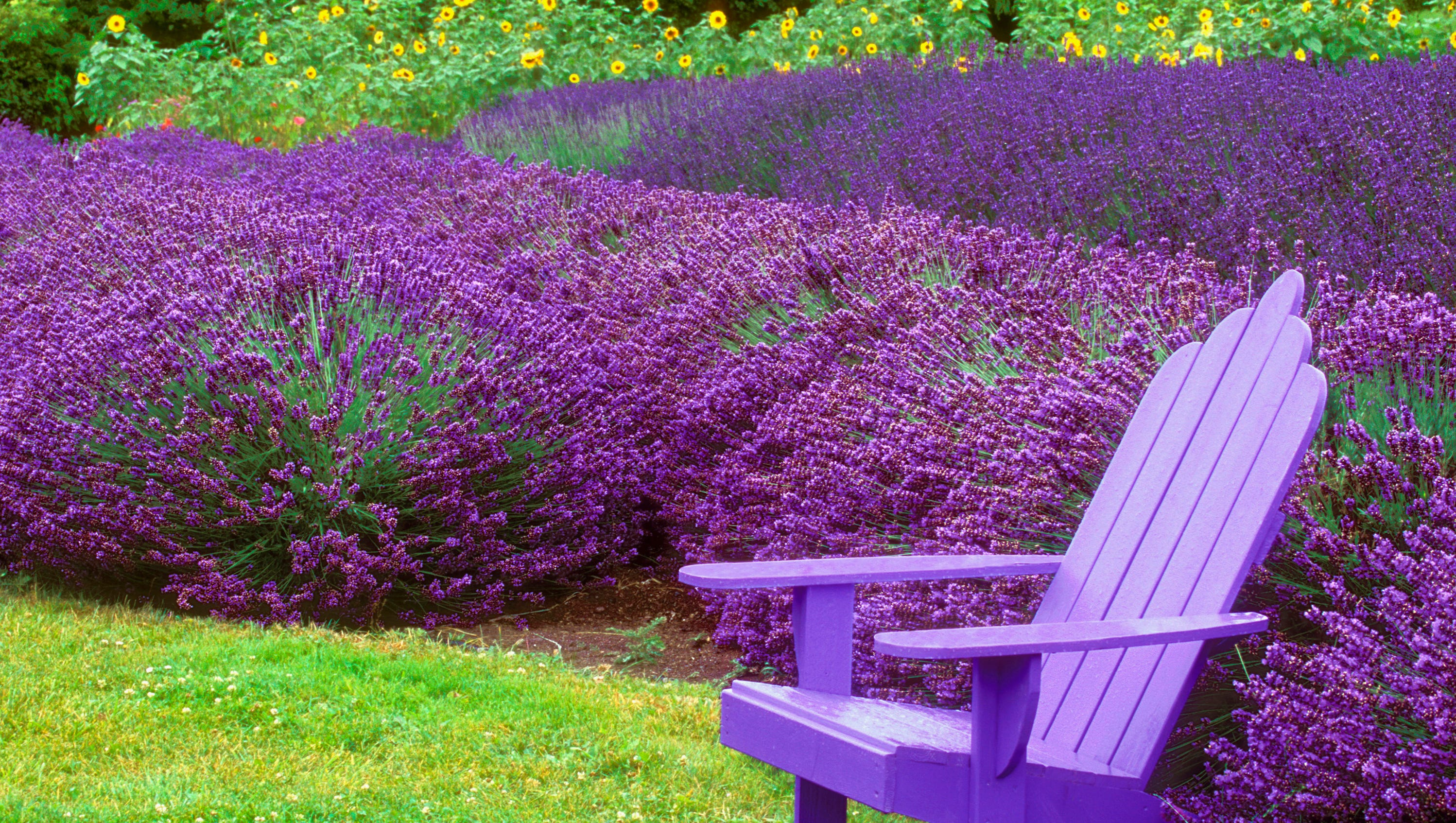 9 Plants That Bug Bugs Including Mosquitoes