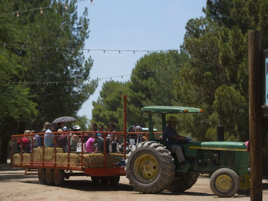 A hayride takes people to the peach orchards during