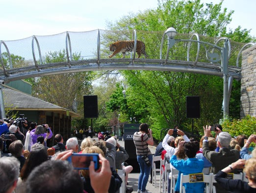 Big Cat Crossing opens to the public on May 10, and is the latest extension of the Zoo360 trail system at Philadelphia Zoo.