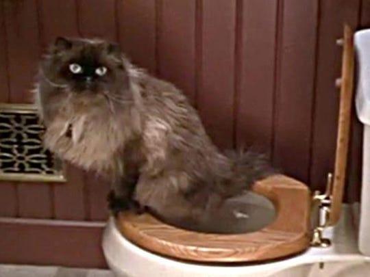 Mr. Jinx uses the toilet