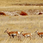 11 big game animals killed, left to rot in eastern Colorado