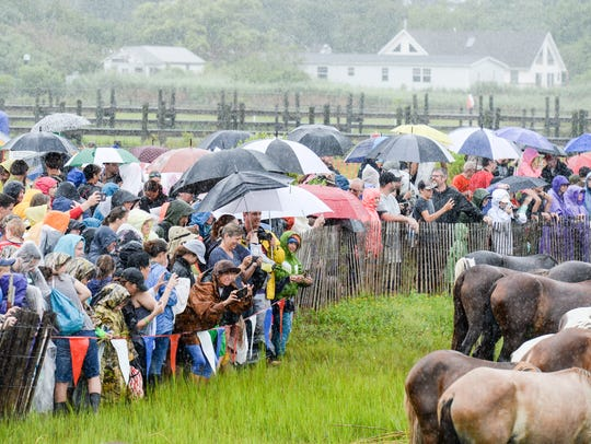 Short downpours soaked the crowd at the 93rd pony swim