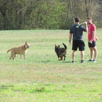 Survey: Knoxville is one of the best U.S. cities for dogs