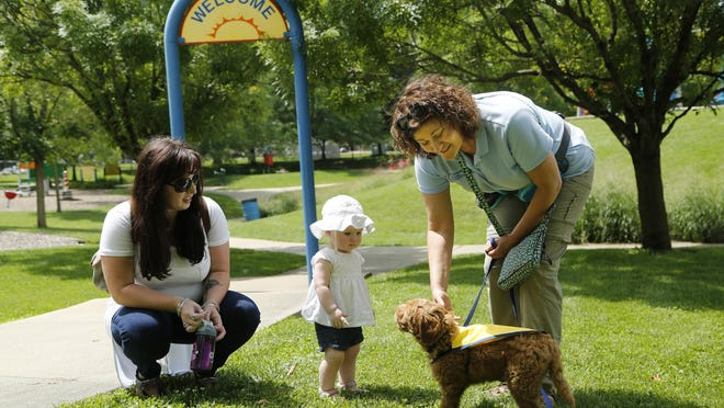 Julie Shaw introduces Charlie, a nine-week-old puppy, to Stacey Wallace and her daughter Melody, 1, Wednesday, July 22, 2015, in Columbian Park. Shaw is with Stepping Stone Animal Training. Charlie is being trained to become an autism service dog. Shaw said she is hoping Charlie is ready to go into service in six to nine months.