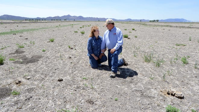 Tracy and Dan Knisley in one of the fields dry and devoid of any alfalfa south of Lovelock on May 28, 2014.