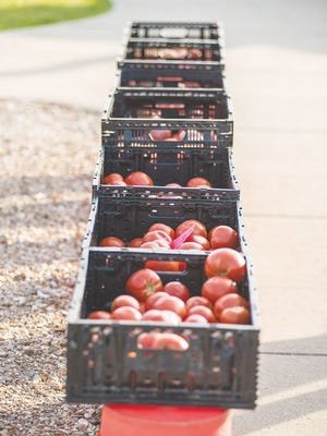 A row of tomatoes sits ready for purchase at the Camdenton Farmers Market in this 2019 file photo.