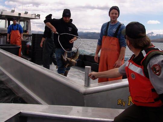 lake trout full net