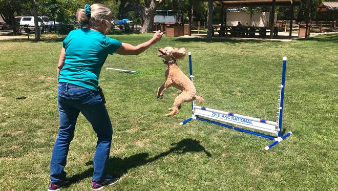 Nancy Lewis, of Ojai, trains with her miniature poodle, Snafu, an American Kennel Club national champion.