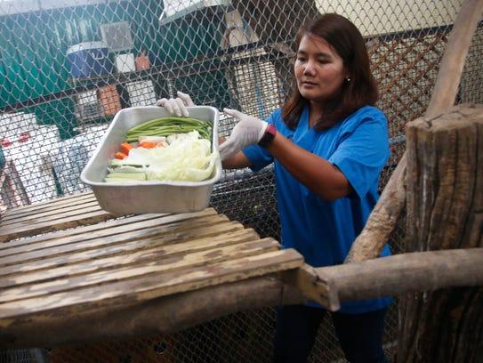 Veterinarian Supakan Kaewchot prepares fresh food for