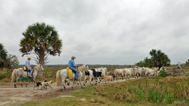 Deer Park Ranch-Kempfer Cattle Company off of U.S. 192 in Brevard and Osceola Counties.