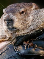 Punxsutawney Phil, the weather prognosticating groundhog,