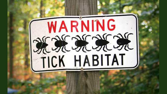 Most people bitten by ticks won't become ill, but those who develop symptoms should talk with their doctor.