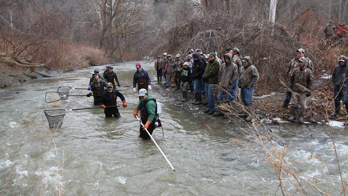 Trout fishing rochester new york for Plenty of fish rochester ny