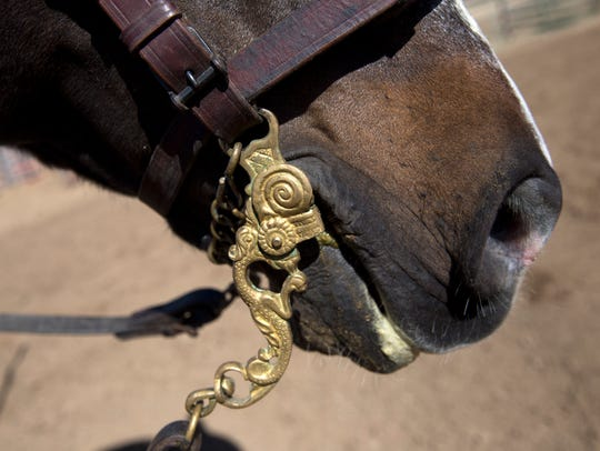 A detail of Coco Dos' bit is pictured Wednesday at McGee Park in Farmington.