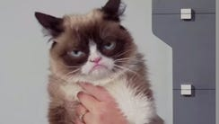 There will soon be a wax replica of Grumpy cat at Madame