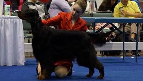 Dozer and handler Georgia Killoran will compete at the Westminster Dog Show in New York.