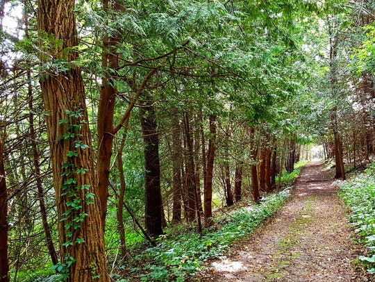 A hiking trail leads through the woods in Dane County's