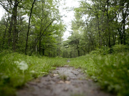 Logger's Loop trail at Standing Rocks County Park in Stevens Point, Thursday, June 11, 2015. The inaugural Hard Rocks Hiking Challenge will be held Sept. 26 at Standing Rocks County Park, 7695 Standing Rocks Road.