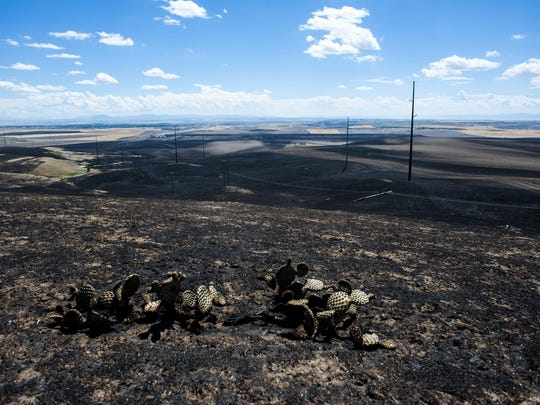 Fire damage, seen from a hilltop off of Vinyard Road, follows utility poles south toward Great Falls on July 27.
