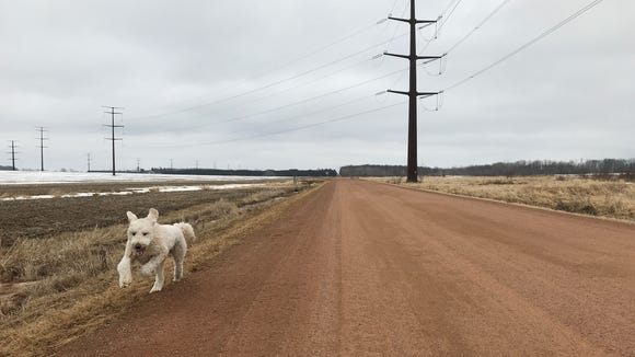 The snow was nearly gone on March 27 when Henry and I went for a run east of Colby.