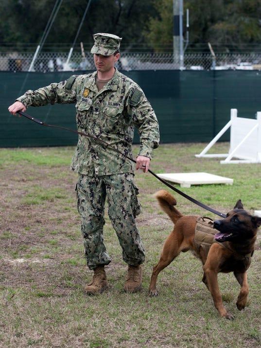 Navy Working Dog
