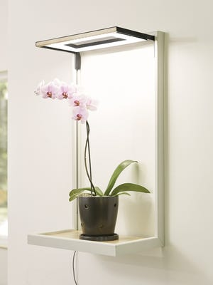 Orchids do best with 12 to 14 hours of sunlight and indoor light systems can help supplement the amount of lightneeded for the plants to thrive.Cultura LED Grow Frames give your plants light year-round.