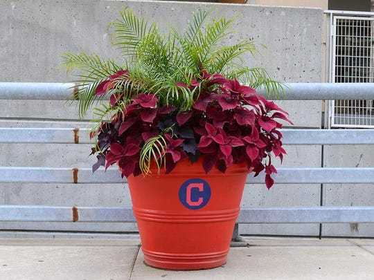 The Cleveland Indians flower pot