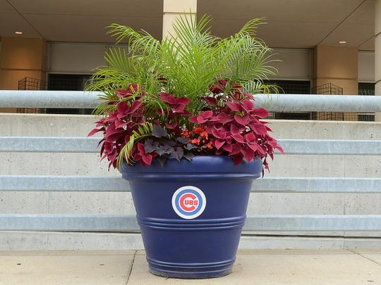 The Chicago Cubs flower pot