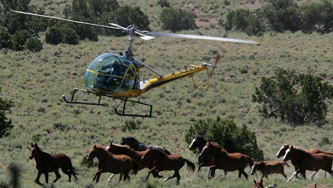 Helicopter pilot Rick Harmon of KG Livestock rounds up a group of wild horses during a gathering July 7, 2005 in Eureka, Nevada. The Bureau of Land Management is gathering wild horses in the American West, where an estimated 37,000 wild horses roam free.