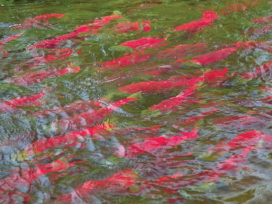 Opportunities for salmon fishing abound in the waters