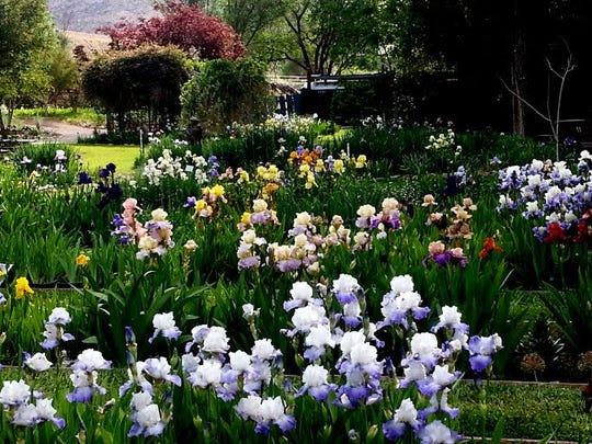 The iris farm garden is known as one of the most beautiful gardens in New Mexico.