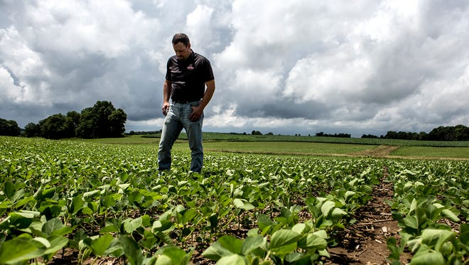 """Andy Hollenback stands in the middle of his soybean field, outside of Utica. Hollenback and his wife bought the farm in 2003, because as Hollenback puts it, """"farming is in his blood."""" Since President Donald Trump announced his tariffs on China, the price of soybeans has dropped, which is worrisome for Hollenback and his family."""