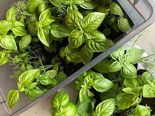 0523-ynsl-herb-garden.jpg