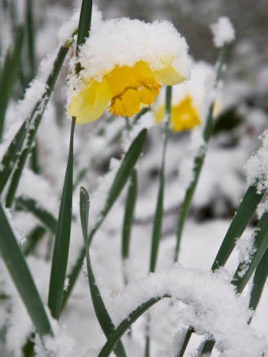 635889082154827883-plant-snow.jpg