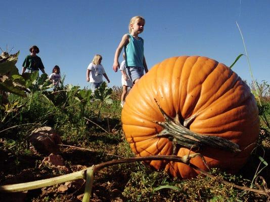 -SNLBrd_10-23-2013_Nixa_1_A007~~2013~10~21~IMG_pumpkinpatch.jpg_1_1_K05E8MTE.jpg