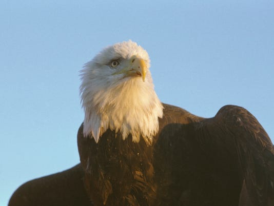636202506978616510-Eagle-8.jpg