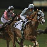 California Chrome of the U.S., ridden by Victor Espinoza, races ahead of El Tren of Ireland during a U.S.$ 150,000 price money race at the Meydan Racecourse in Dubai, United Arab Emirates, Thursday, Feb. 25, 2016. (AP Photo/Kamran Jebreili)