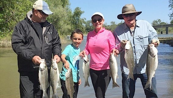 Pictured left to right is Mike Hagans and his 10-year-old grandson, Cole Hagans, of Sacramento, and Jerie Semion and Alan Semion of Granite Bay with a nice daily haul of Sacramento River striped bass.
