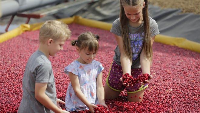 Jakob, 5, Aria, 3 and Erika Sleznikow, 9, of Marshfield play in the cranberry bog at the 2018 Wood County Farm Technology Days Tuesday, July 10, 2018.