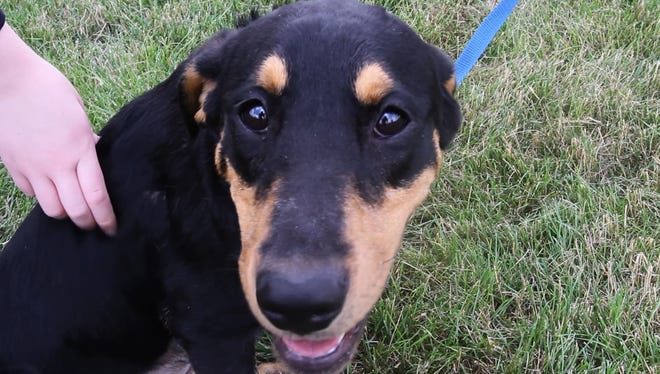 Aruba is a 10-month-old female, black and tan Rottweiler mix. She is wiggly and likes lots of cuddling. She loves people, but she also likes other dogs.