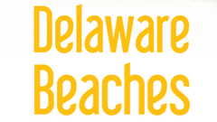 Keep up with the latest news from the beach, including