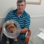 John Kilderry holds Jasper, a Yorkshire Terrier stabbed by a burglar over the weekend