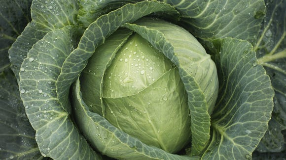 """""""loved the way the cabbage  in my garden near-inverts"""