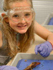 Kids learn why dissection is a useful skill in the Milwaukee County Zoo's vet camp.
