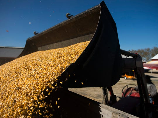 Kenneth Carlisle, 60, loads corn feed for his flock of nearly 300 sheep Tuesday, Oct. 31, 2017 on his farm in Moorestown, New Jersey. He and his wife Charlene Carlisle, 59, own Little Hooves, which is the largest sheep farm in South Jersey.