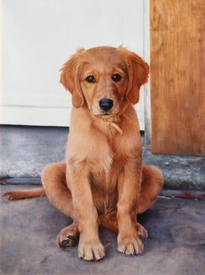 Ginger the Dog.