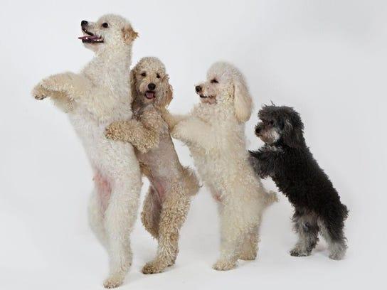 olate dogs 2015 5