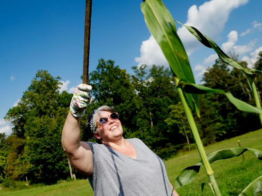 Lisa Marie White, executive pastry chef at Marsh House restaurant in Nashville, helps cut down sorghum in a field at Muddy Pond Sorghum Mill in Muddy Pond, outside of Monterey, Tennessee, on Monday, September 18, 2017.