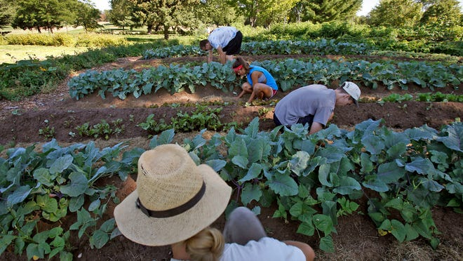 Volunteers are needed at Riverview Gardens.