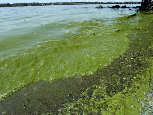 LAKE algae-9-c1 DAY5